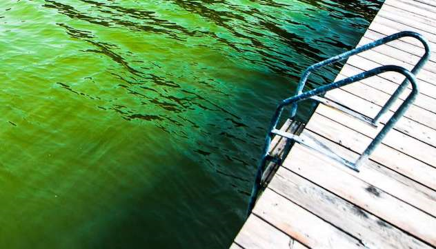 Ouxioaz Boys Swim Trunk Turquois Marijuana Leaf Beach Board Shorts