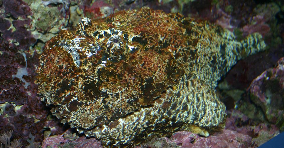 Smugglade kokain i tropiska fiskar